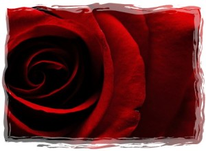 rose 1-framed