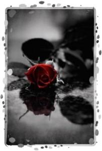 rose 14-framed