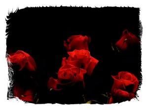 rose 17-framed