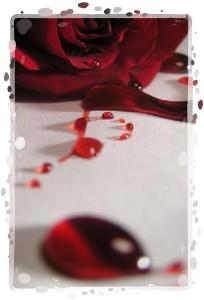 rose 22-framed
