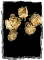 rose 30-framed