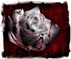 rose 32
