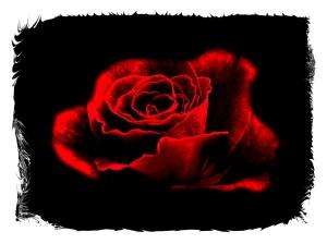 rose 38-framed