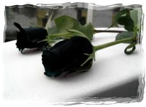 rose 52-framed