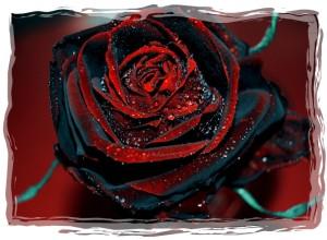 rose 53-framed