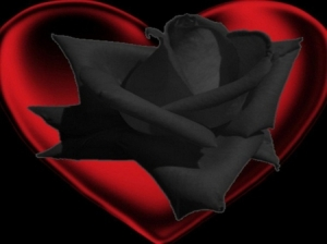 rose 54