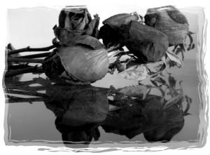 rose 62-framed